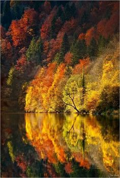 Wow. Gorgeous reflection of autumn...