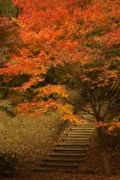 Autumn promenade