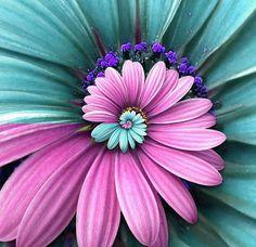#turquoise #purple #nature