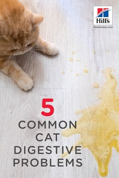 Learn from a Veterinarian: Discover some vet-recommended advice about common cat digestive problems, including how to deal with worms, hairballs, and more. Cat Throwing Up, Cat Vitamins, Cat Plants, Cat Nutrition, Long Haired Cats, Cat Care Tips, Cat Grooming, Cat Health, Cats And Kittens