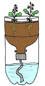 Irrigação semente This is also a great idea for starting seeds as the moisture comes from the bottom, thus eliminating the fungus that kills many seedlings when you water from the top. Vegetable Garden, Garden Plants, Indoor Plants, House Plants, Container Gardening, Gardening Tips, Self Watering, Plantation, Seed Starting