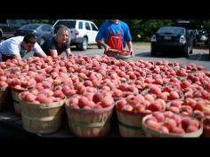 ▶ Peach Palooza: Field Trip - YouTube