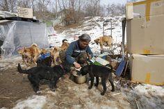 Se llama Jung Myoung Sook tiene 61 años, es surcoreana y ha pasado casi la mitad de su vida salvando a perros que corrían el riesgo de sufrir una muerte horrible en un país como Corea del Sur en el que los canes lejos de ser vistos como el mejor amigo del hombre, son considerados un apetitoso manjar.