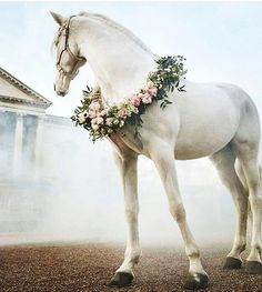 """horses rhianalexandraa: """"Flowers In The Fog"""" – savary – – rhianalexandraa: """"Flowers In The Fog"""" rhianalexandraa: """"Flowers In The Fog"""" Related posts:Photo of naivety😇Engagement PhotosPhotography Tips Cute Horses, Horse Love, Horse Girl, All The Pretty Horses, Beautiful Horses, Animals Beautiful, Beautiful Soul, Animals And Pets, Baby Animals"""