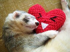 ♥ I love ferrets, they make such good friends and are so intelligent.