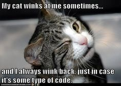 My cat winks at me sometimes...  and I always wink back, just in case it's some type of code.