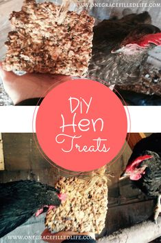 Your girls (and Roo) will ❤️ these nutritious & delicious treats! Hen treats, chicken treats.