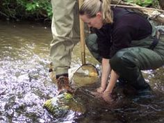 Collecting aquatic insects as part of the environmental monitoring for the Suisun Creek Watershed program