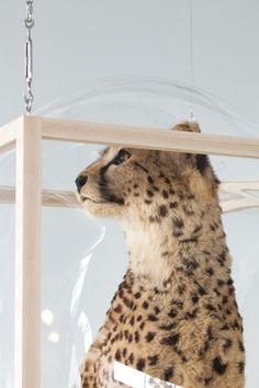 LARGE-hanging-showcase-curatorcabinet-cheetah-Studio_Thier&VanDaalen-landyel