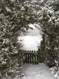 through the back gate and out to the field for sledding #wintergarden #winter wonderland #woods #garden