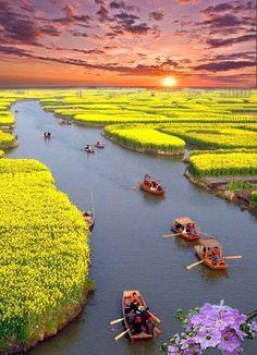 Find beauty everywhere • Canola Fields, China