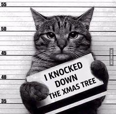 prisoned of knocking down a tree :D #kawaiiii ^_^
