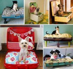 #pug #daushund #salsicha #cozinha #mala #bagagem  #yorkie #felinos #gatos #cachorros #cama #casasmodernas