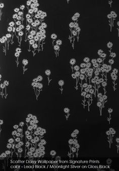 Scatter Daisy wallpaper from Signature Prints in Lead Black / Moonlight Silver on Gloss Black