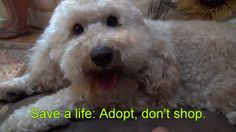 Please make a small donation: http://www.HopeForPaws.org If you are BLOCKED from watching this video, please click here: https://vimeo.com/eldad75 To adopt m...