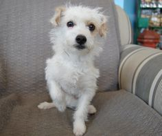 Mo- Terrier Mix (5 Months Old)