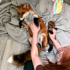 Exotic celebrity pet influencers – The animals who run social media Cute Baby Animals, Animals And Pets, Funny Animals, Pet Fox, Fox Art, Tier Fotos, Cute Creatures, Exotic Pets, Spirit Animal