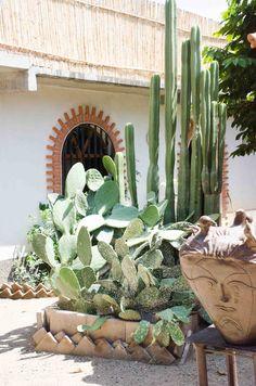 Cactus in Oaxaca, Mexico                                                                                                                                                                                 Más