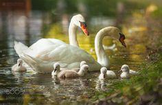 One fluffy family by adypetrisor via http://ift.tt/2sWgAGV
