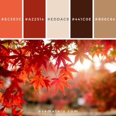 Red maple leaves in corridor garden with blurred sunlight Color Palette – Ave Mateiu Color Schemes Colour Palettes, Warm Colour Palette, Color Palate, Warm Color Schemes, Color Combinations, Winter Colors, Summer Colors, Warm Colors, Summer Flowers