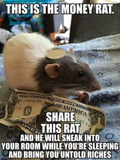 rat memes - Google Search