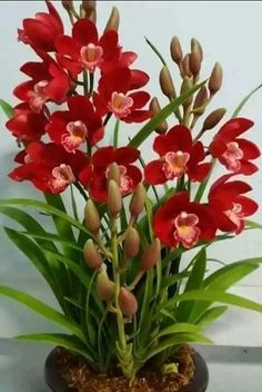 Red #orchids