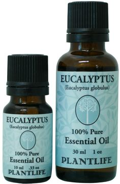 Group Eucalyptus Recipe Of The Week: 10 Practical Uses For Eucalyptus Essential Oil Manuka Essential Oil, Fennel Essential Oil, 100 Pure Essential Oils, Essential Oil Uses, Eucalyptus Oil, Eucalyptus Essential Oil, Essential Oils For Breathing, Patchouli Oil, Natural Colon Cleanse