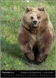 Home - motiv-digital Brown Bear, November, Pets, Digital, Animals, Wild Animals, Horseback Riding, November Born, Animales