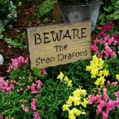 """Beware      Cute. As. Hell. XD reminds me of my """"chicken crossing"""" sign ornament I have with my sempervivums (aka. hens and chickens). This snapdragon one takes the cake though 3"""