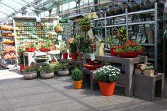 Ruim aanbod plantenzaden
