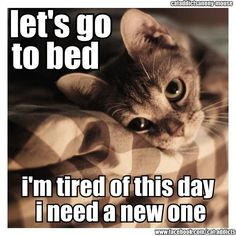 I feel like this all the time but the cat makes this so much better!