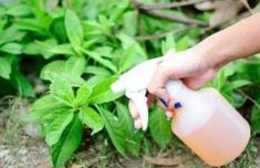 Garden Types, Garden Web, Apple Cider Vinegar Uses, Pot Plante, Neem Oil, Garden Pests, Garden Insects, Medicinal Herbs, Stuffed Hot Peppers
