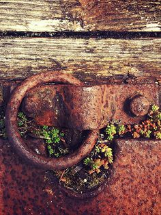 Leave a priceless patina. Rust Never Sleeps, Rust In Peace, Knobs And Knockers, Rusted Metal, Peeling Paint, Old Doors, Texture Art, Abstract Photography, Wabi Sabi