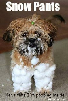 Snow Pants                                                                                                                                                      More #ShihTzu