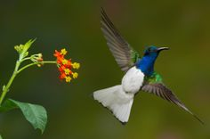 What's the buzz - inviting hummingbirds for a visit