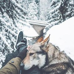 A photographer shares his passion for the simple things in life with his beloved dog in stunning pictures he takes from their adventures. Boy Dog, Dog Mom, Cute Puppies, Cute Dogs, Animals And Pets, Cute Animals, Czechoslovakian Wolfdog, Hiking Dogs, Golden Retriever