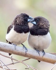 Breathtaking >> Little Messenger Birds Book #excellent