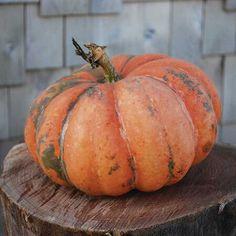 Types Of Pumpkins, Pink Pumpkins, Painted Pumpkins, Fall Pumpkins, Halloween Pumpkins, Green Fruit, Fruit And Veg, Fruits And Veggies, Fresh Vegetables