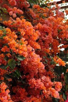 Beautiful Flowers Wallpapers, Beautiful Nature Wallpaper, Outdoor Plants, Garden Plants, Fruit Garden, House Plants, Amazing Flowers, Pretty Flowers, Landscape Design