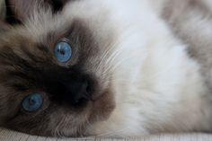 such blue eyes!!!!