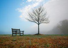 Identify 15 hardwood tree species in winter using twig/bark technique. Tree Identification, Winter Trees, Outdoor Furniture, Outdoor Decor, Hardwood, Sky, Seasons, Explore, Gallery