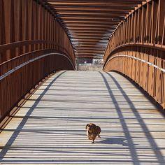 Make Massive Change To Your Dachshund´s Behaviour in Just 1 Day! - dachshund #dachshund
