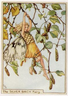 Silver Birch Flower Fairy Vintage Print, c.1950 Cicely Mary Barker Book Plate Illustration