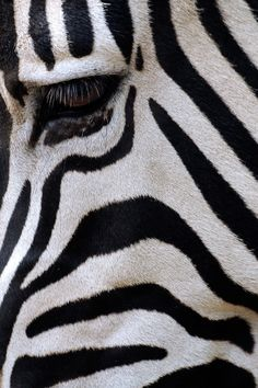 """From Reddit """"Black and White Camouflage by Andre Gallant"""""""