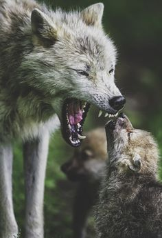 .Listen little one ... we need to listen to the wilds, there are bad things humans do ... so pay attention to your lessons and learn!