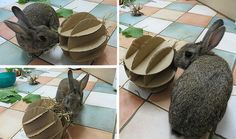 for making slotted cardboard feed ball for rabbits, to be stuffed with hay/treats.Instructions for making slotted cardboard feed ball for rabbits, to be stuffed with hay/treats. Rabbit Treats, Rabbit Toys, Pet Rabbit, Diy Bunny Toys, Diy Toys For Rabbits, Bunny Room, Bunny Hutch, Bunny Cages, Raising Rabbits