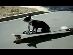 ▶ Dogs Fail Compilation 2013 - YouTube