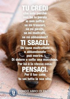 Non abbandonarli mai, ad es - Italia Divertenti Save Animals, Animals And Pets, Love Pet, I Love Dogs, Phrases About Life, Hachiko, Cute Cats And Dogs, Girl Meets World, Dog Memes