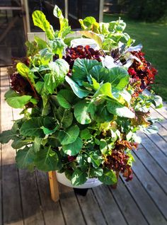 Garden Tower Willie Streeter, salad bar.  50 plants in 4 sq. ft.  watered with compost tea, nutrient rich compost put in the middle tower.