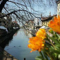 #navigli #milano #girovagando #milanodavedere #italia_super_pics #mymilano #italian_places #flowerstagram #italiainunoscatto_hdr by instangel_r